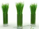 лимонная трава.jpg