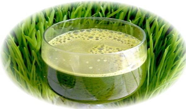 напиток из проросшей пшеницы